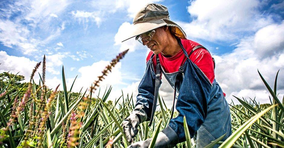 Un agricultor en el campo