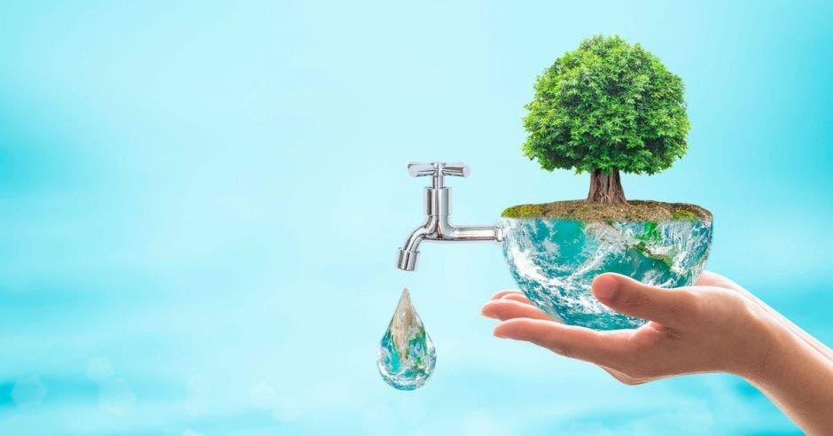 Agua saliendo de un árbol