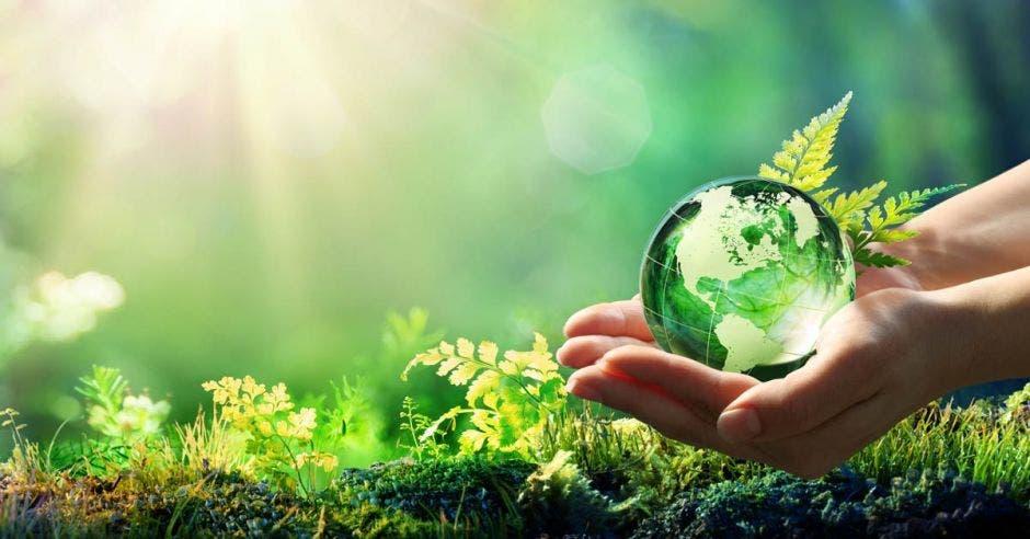 Concepto de conservación ambiental