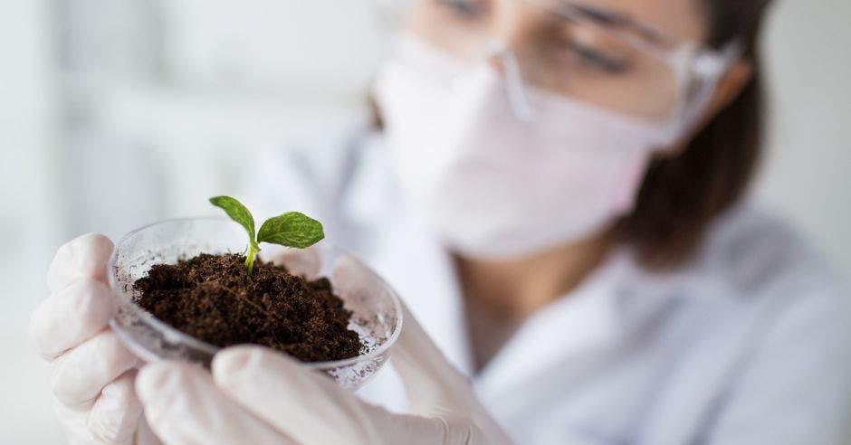 Una científica analiza una muestra de una planta