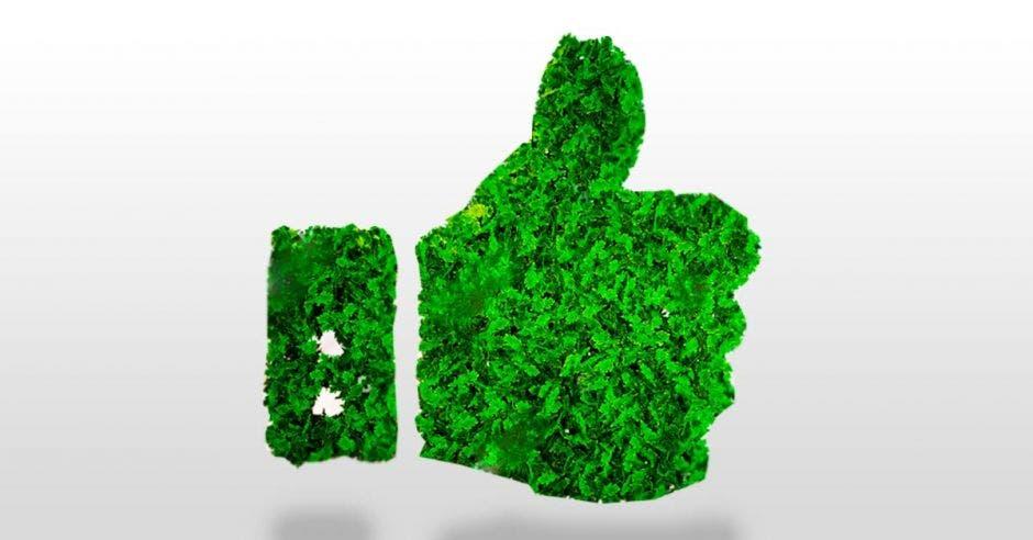 Mano con dedo pulgar para arriba como signo de aprobación, hecha de hojas verdes. Fondo en Blanco.