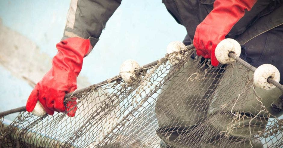 Pescador usa una red para atrapar peces