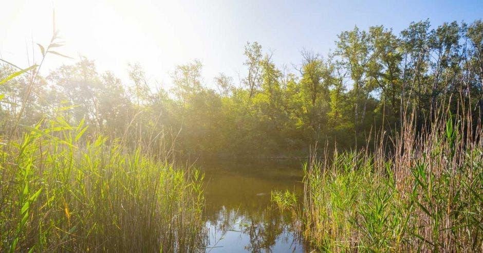 Una laguna rodeada de pasto verde semiflotante