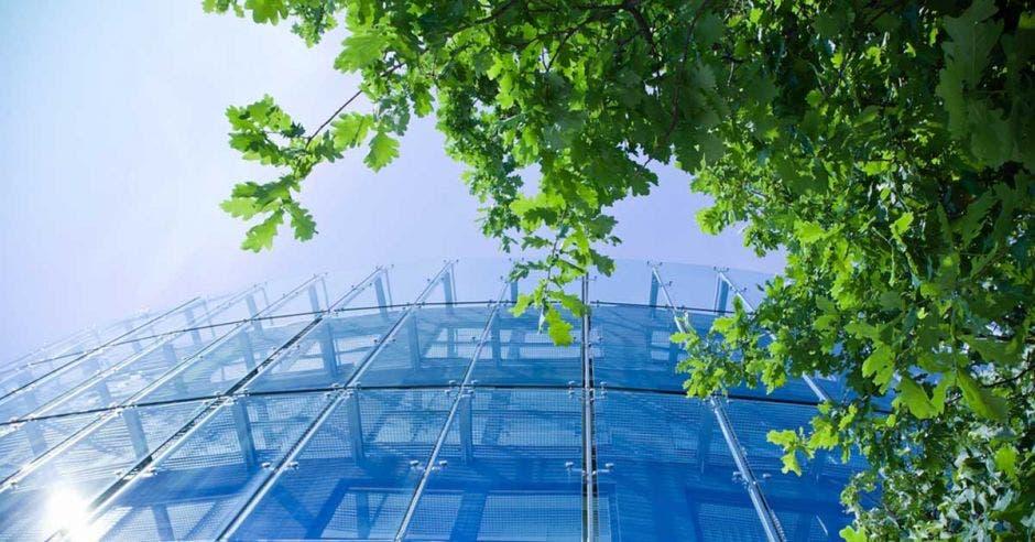 Un edificio con fachada de cristal, tapado por un árbol