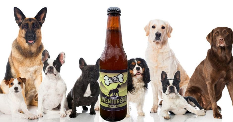 perros y cerveza