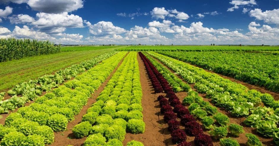 Una finca con cultivos verdes