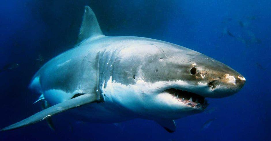 Un tiburón surca el fondo marino