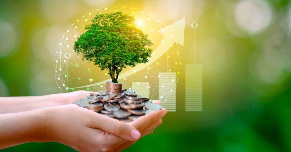 fondo verde con manos sosteniendo un árbol con monedas en lugar de tierra en su base con gráfico de fondo