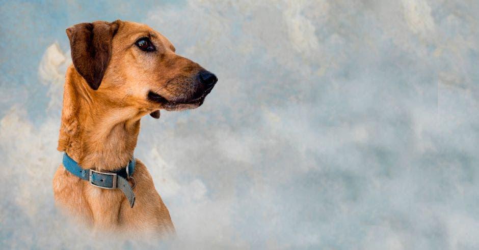 perros mascotas cielo