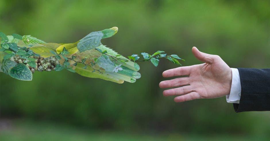 una mano de una persona, se da la mano a con una mano verde con matas verdes. fondo verde
