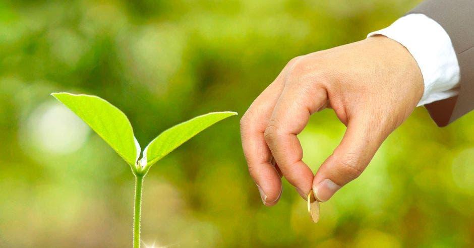 Mano con moneda en la mano, la pone en un puñito de tierra con monedas, del que crece una planta