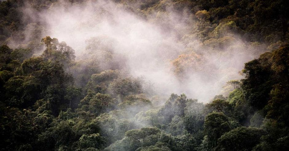 Bosque nuboso en San Gerardo de Dota