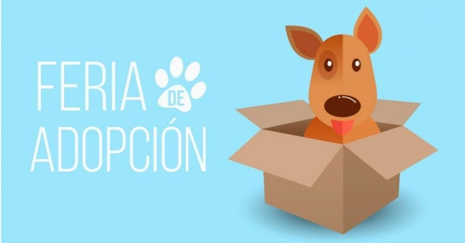 feria de adopción mascotas