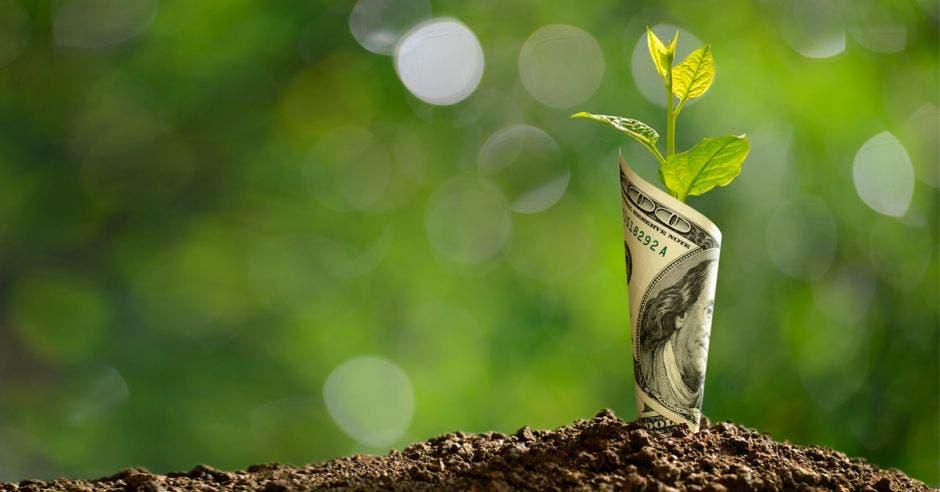 Un dolar sembrado en la tierra del cual sale una pequeña planta