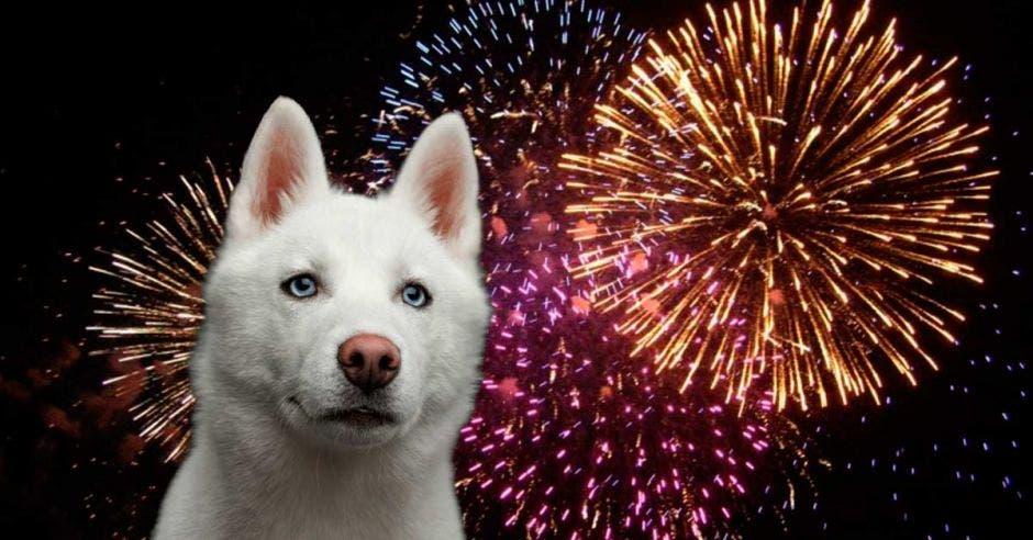 perro blanco y juegos artificiales