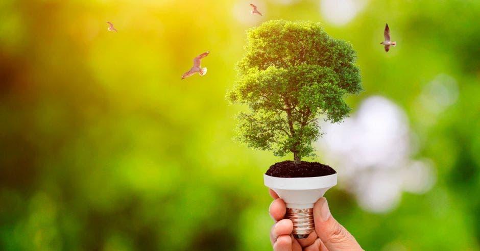 Persona sostiene un bombillo con forma de árbol