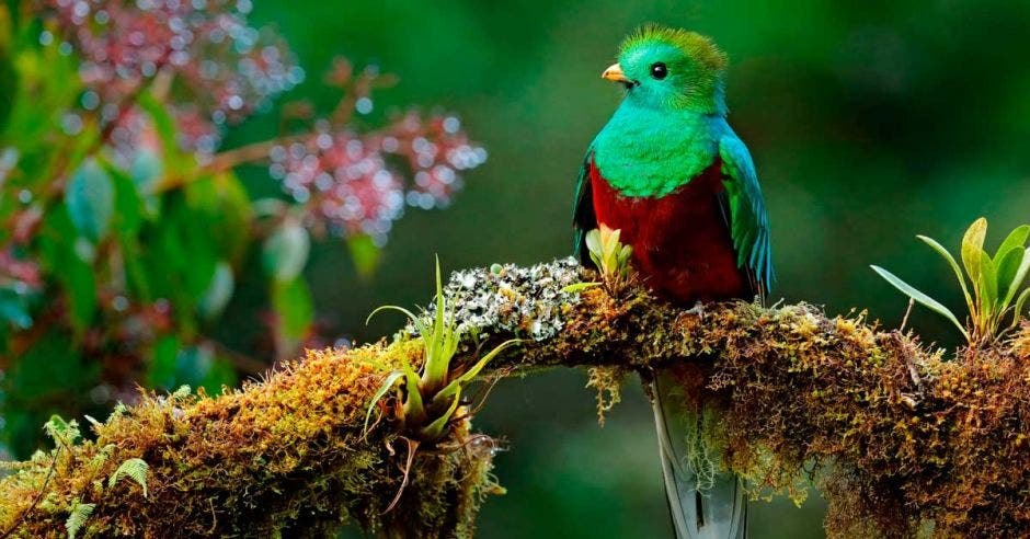 La variedad de aves y el bosque nuboso de la zona hacen que Los Santos tenga un gran potencial turístico. Shutterstock/La República.