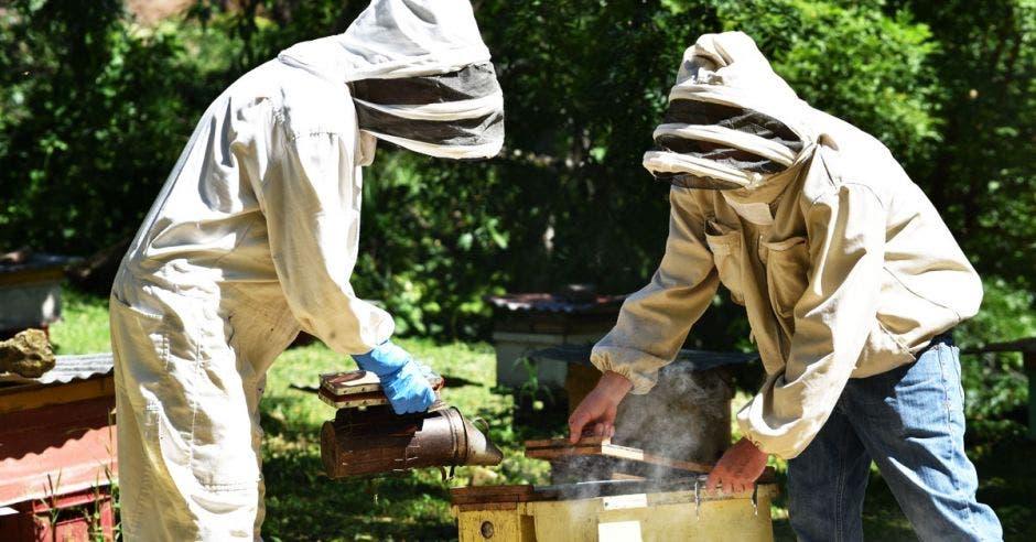 Alonso Corrales ha logrado un mejoramiento genético de las abejas reina para que sean tan productivas como las africanas pero tan dóciles como las locales.
