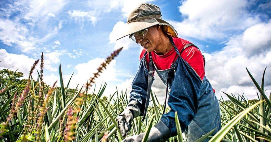 Un agricultor vigila sus cultivos en el campo