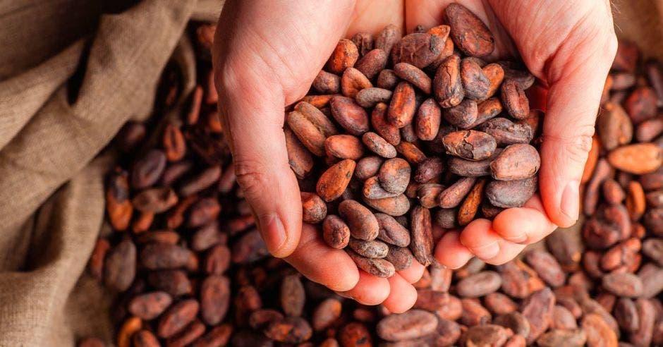 Durante el 2018, Costa Rica fue el exportador de ingredientes de cacao número 71 en el mundo. En total, el país exportó $1,2 millones. Shutterstock/La República.
