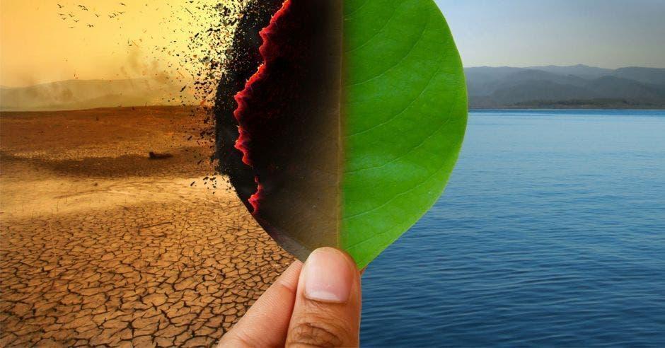 hoja de un árbol , al  lado derecho  verde con mar de fondo, y al izquierdo, quemada con un desierto de fondo