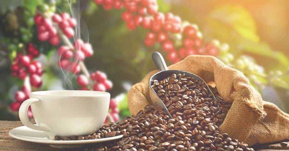 Café cosechado