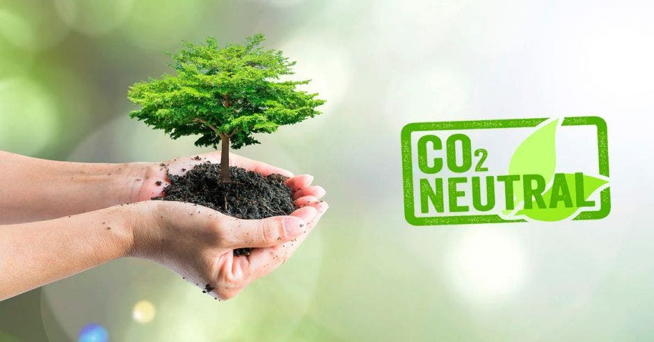 persona sosteniendo  un árbol entre las manos y la palabra Carbono  neutrale33