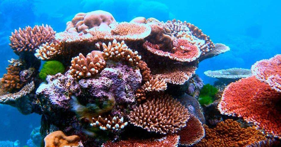 Corales marinos de varios colores