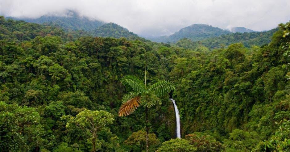 Una cascada en medio de un bosque silvestre