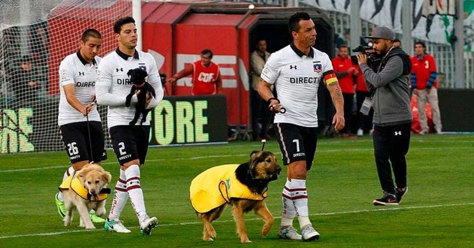 perros y jugadores
