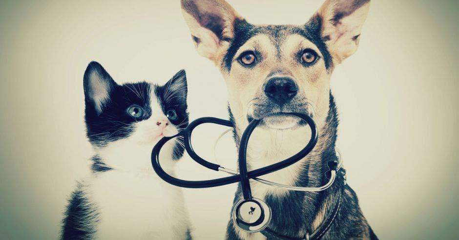 Las mascotas están seguras. Shutterstock/La República.