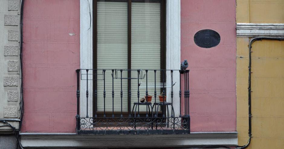 Una paloma posa sobre un balcón