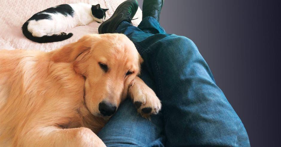 Alguien sentado con el perro en su regazo y un gato a sus pies