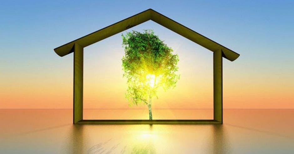 árbol en medio de una casa