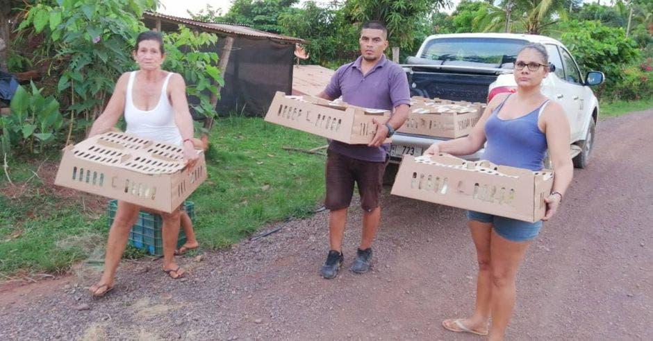 Productores recibiendo cajas con las pollitas ponedoras