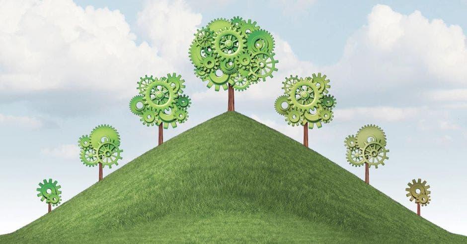 Árboles verdes en un campo