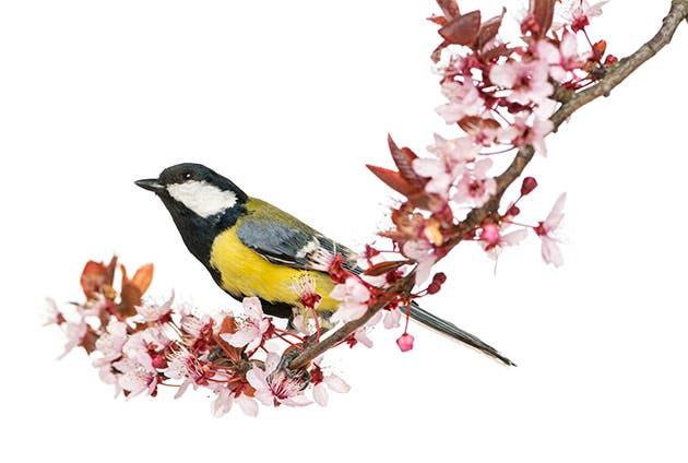 Un pájaro descansa sobre una rama con flores