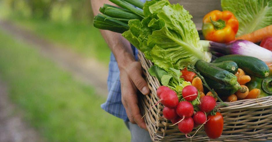 Una persona carga vegetales en una caja como pepino, lechuga, rábanos y chiles