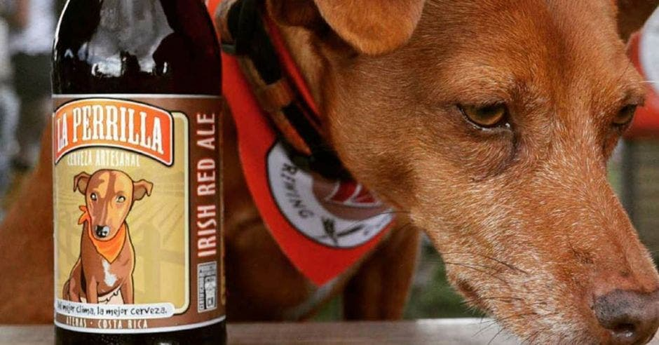perro y cerveza