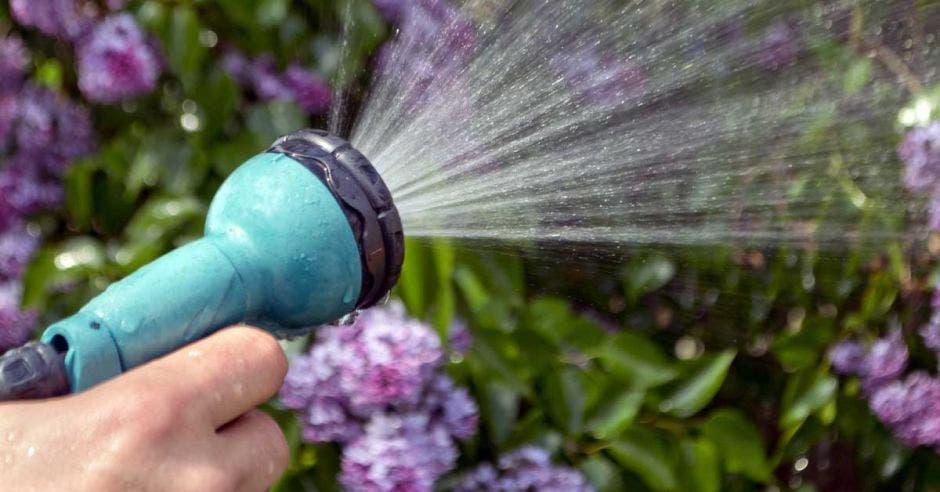 Una persona riega las plantas de su jardín