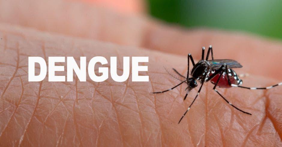 Dengue sobre la piel de un humano