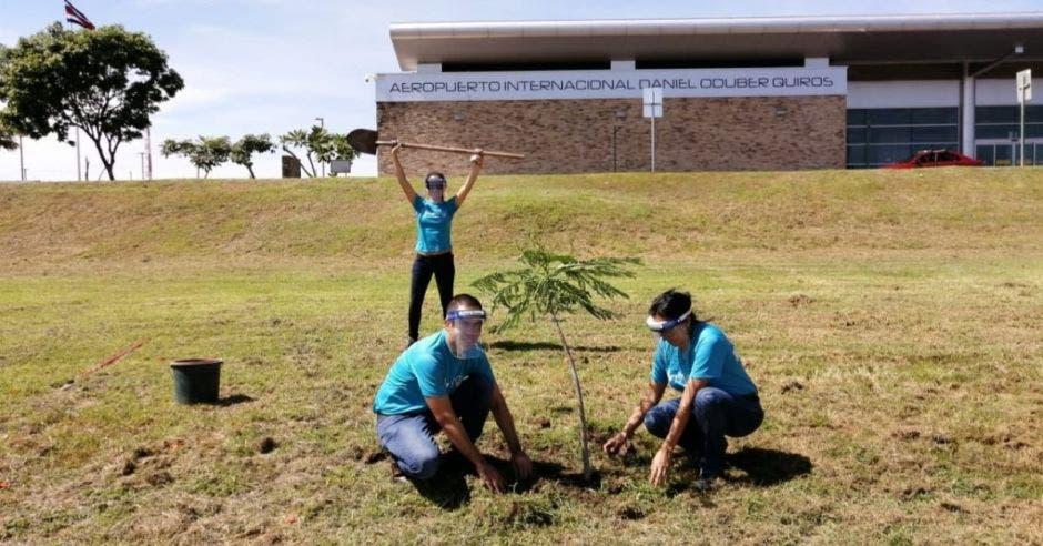 Tres personas siembran un árbol en campo abierto
