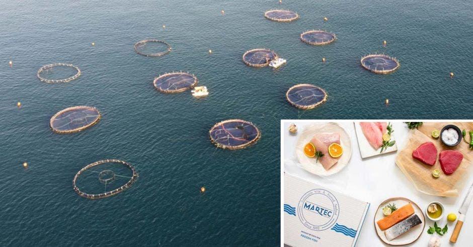 Redes en el mar y una caja con pescado fresco