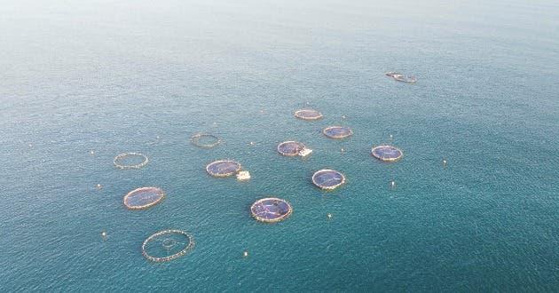 Una granja de maricultura