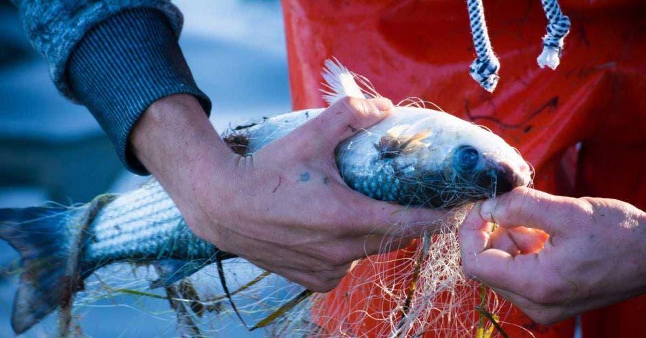 un pescador suelta un pez de una red de arrastre
