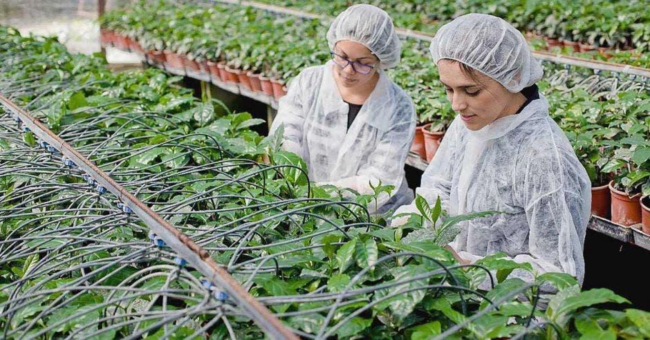 Dos mujeres experimentan con plantas en un vivero