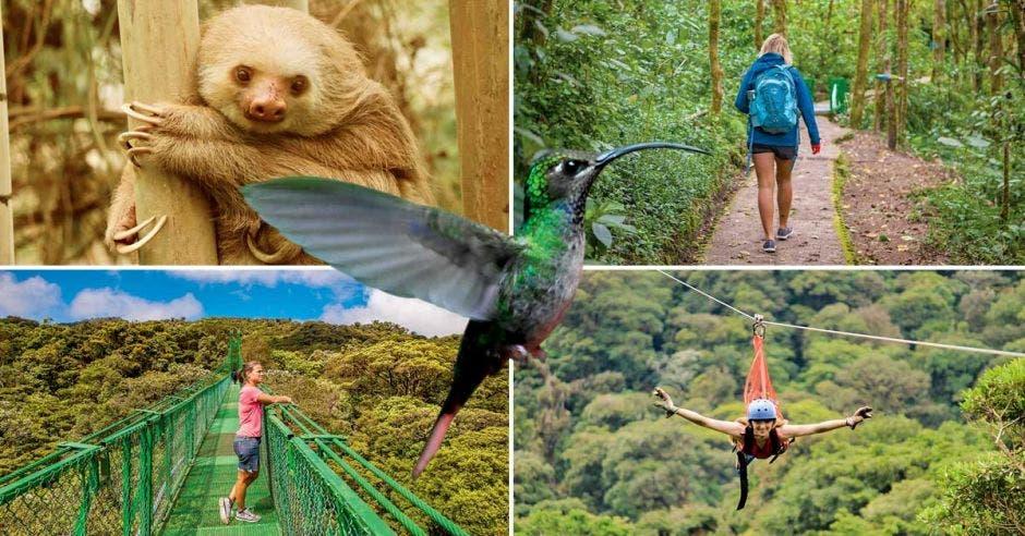 Monteverde atracciones