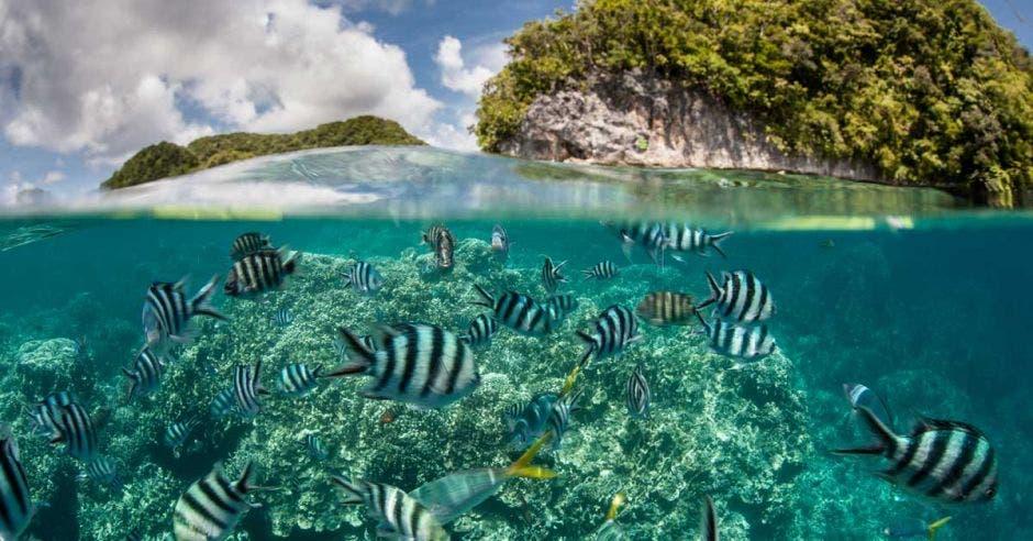 Vemos un arrecife coral