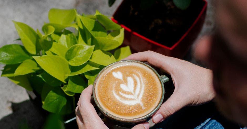 Café y planta