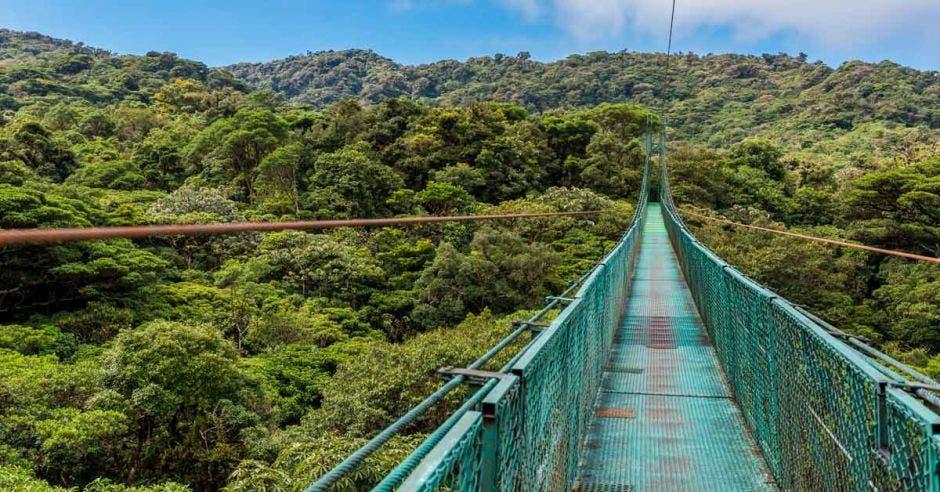 Puente colgante color verde en medio de la naturaleza